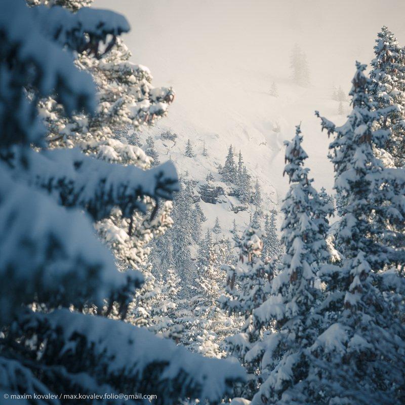 europe, cloud, fir, mountain, nature, pine, plant, slope, snow, tree, winter, европа, гора, дерево, ель, зима, облако, природа, растение, склон, снег, солнечно, шишка Среди елей заснеженных.. / Among the snowy firs..photo preview