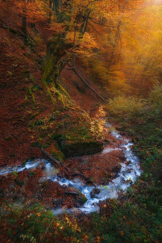 medvednica, zagreb, croatia, landscape, autumn, forest, tre, orange, river  medvednica  фото превью