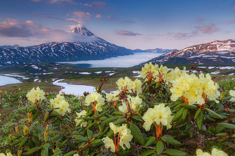 Камчатка, вулкан, пейзаж, природа, цветы, лето, путешествие, фототуры Цветы вулканаphoto preview