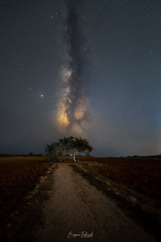В полночь вселенная пахнет звёздами