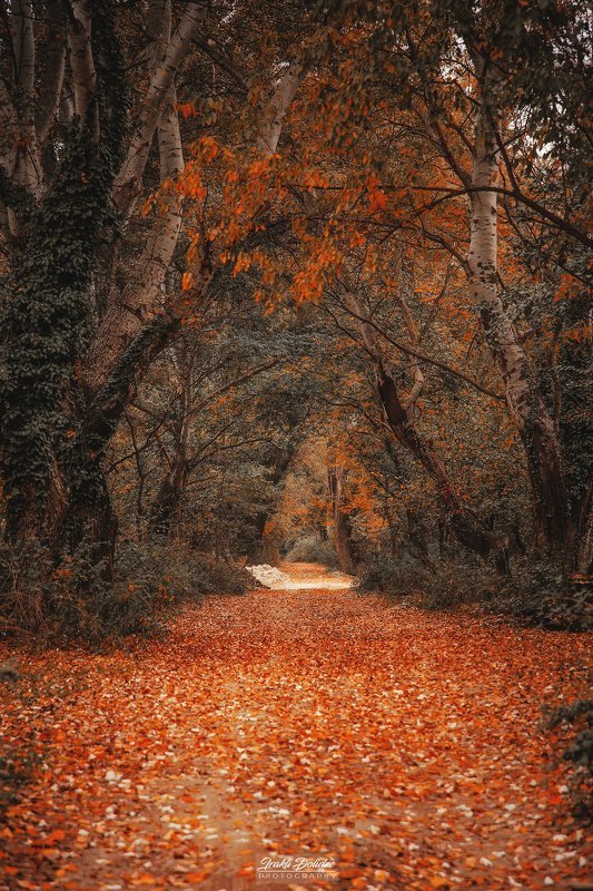 autumn, landscape, road, walking, outdoor, leaves, leaf, autumn leaves, red, yellow, tree, photography, canon, canon photography, love, weather, november, earth, beautiful Walking in the parkphoto preview