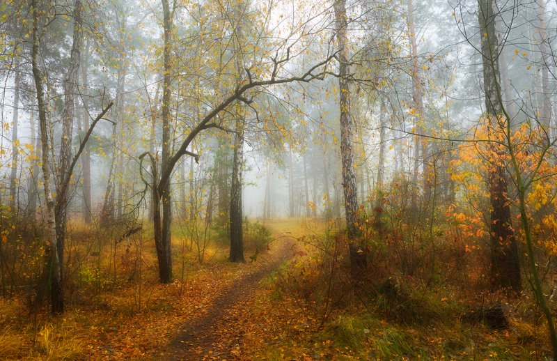 лес, осень Арки осенних аллейphoto preview