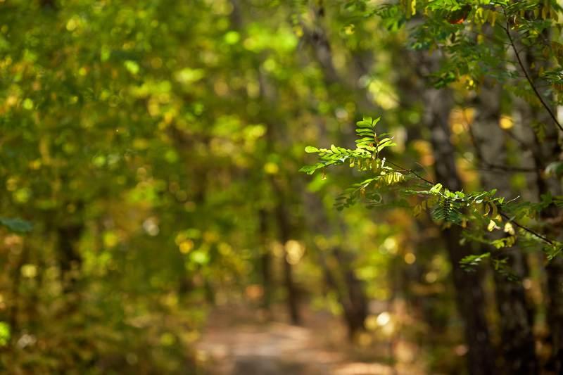 осень,листья,лес,парк,природа Пестрела осень..photo preview