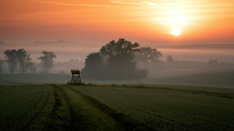 fog, field, morning, sunrise Morning on the fieldphoto preview