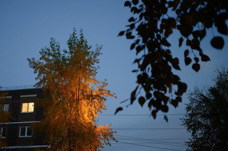 уличная фотография, streetphotography, северодвинск, осень, ночь, В свете фонарейphoto preview
