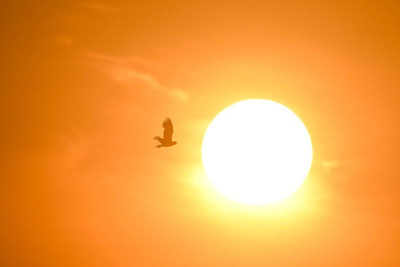 оранжевое небо, обыкновенная овсянка, жёлтая птица, оранжевый, рассветный свет, чибис, силуэт птицы, солнце На рассветеphoto preview