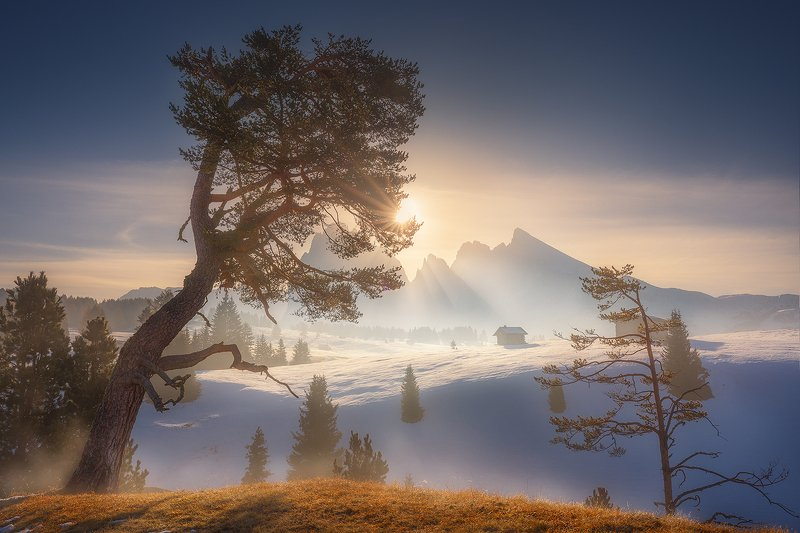 alpe, di, siusi, dolomiti, landscape, italy, winter, autumn, snow, tree, mountain,  alpe di siusi фото превью