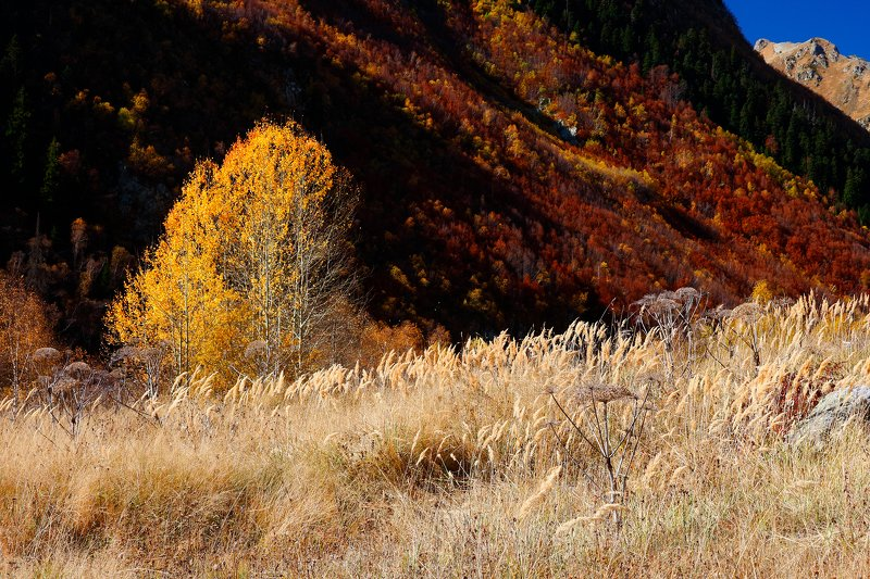 домбай, осень, горы, кчр, гоначхир, гоначхирскоеущелье, photo preview