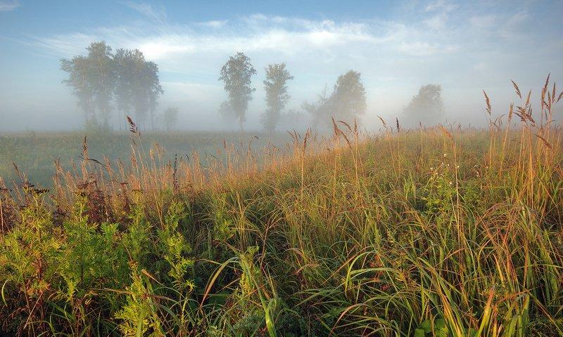 рассвет, утро, свет, поле, трава, облака, туман, лето Уходящее летоphoto preview