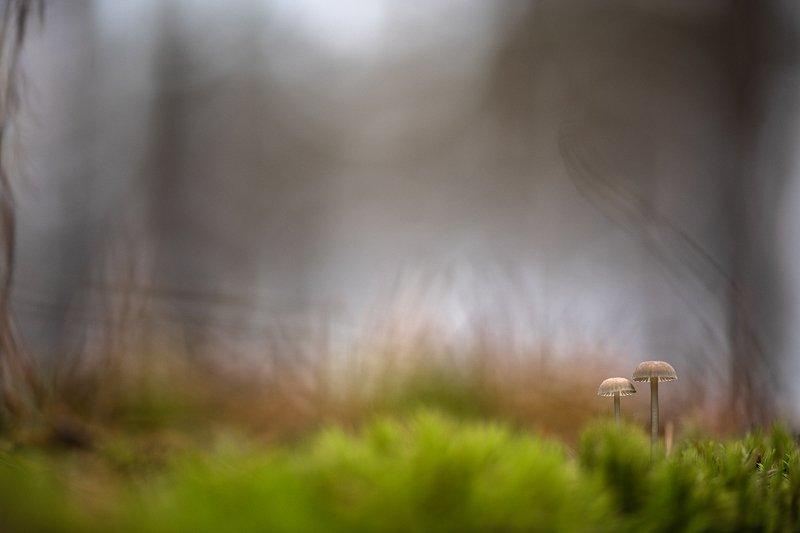 макро, мох, грибы, акварель, свет, осень, ноябрь, цвет, воронеж, в лесу, геннадий мещеряков Ноябрь для двоих...photo preview