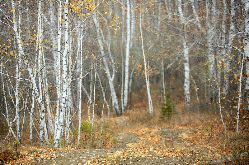южный урал,оренбургская область, орск, новотроицк,башкирия, башкиртостан Воздух в лесу!photo preview
