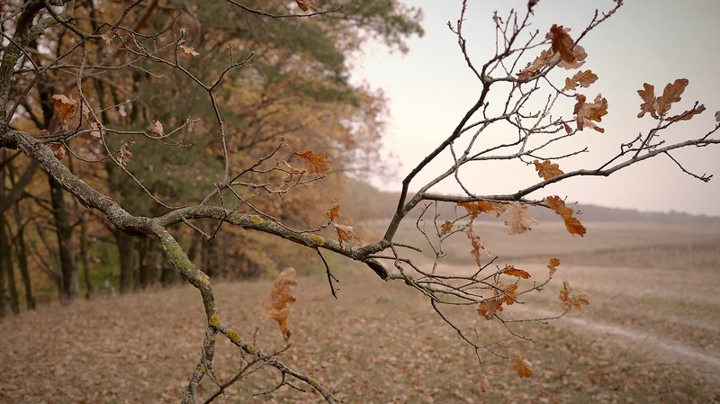 autumn, nature Autumnphoto preview