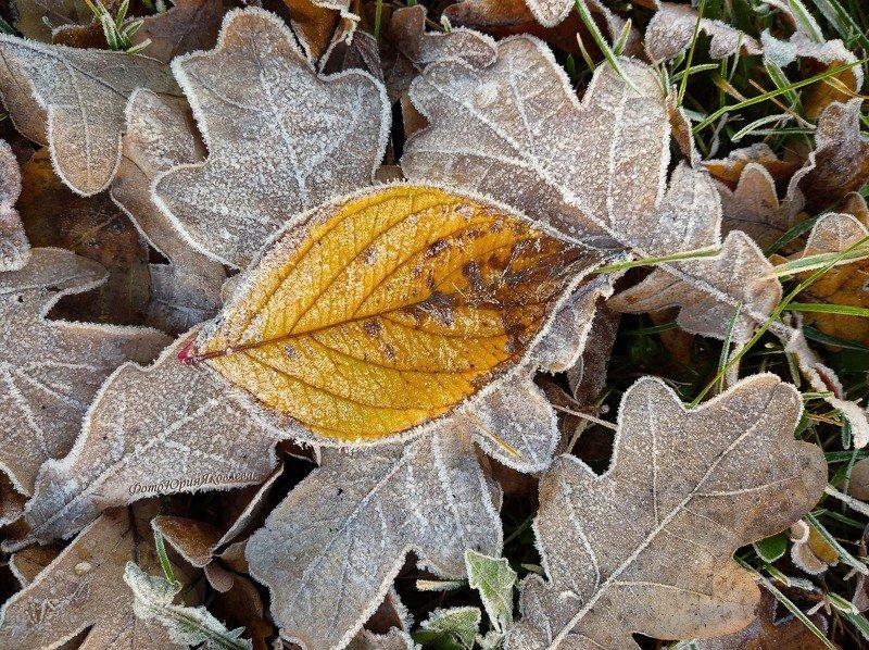 пейзаж, природа, листья, снег, мороз, В сахарной пудре.photo preview