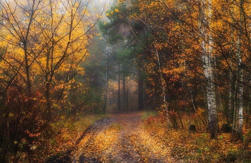 лес, осень, ноябрь Бронзовая осеньphoto preview