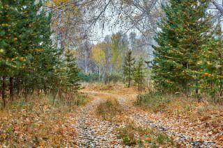 Сказка Осеннего Леса