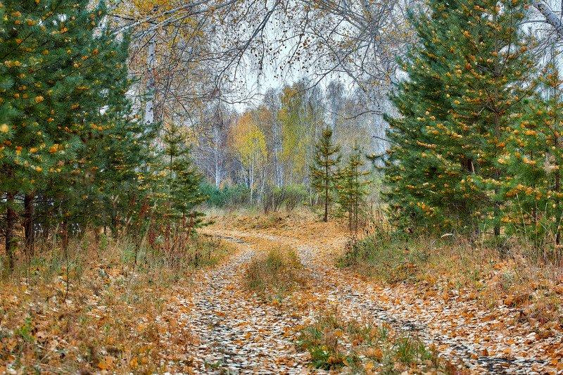 башкирия, южный урал орск новотроицк Сказка Осеннего Лесаphoto preview