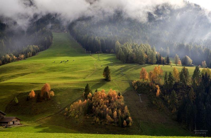 Альпийские луга фото превью