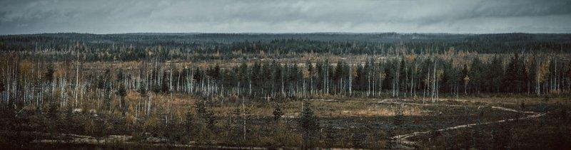 россия, деревья, лес, осень, поле, пустошь autumn wastelandphoto preview