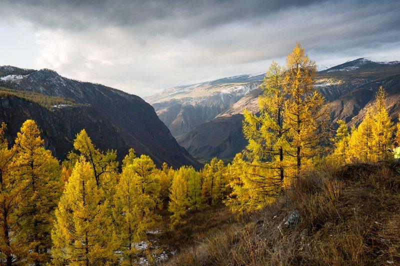 горный, алтай, горы, долина, чулышман, лиственницы, осень Затерянный мирphoto preview