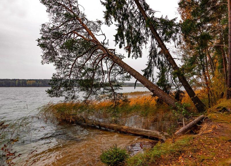 осень, пейзаж Ветренноphoto preview