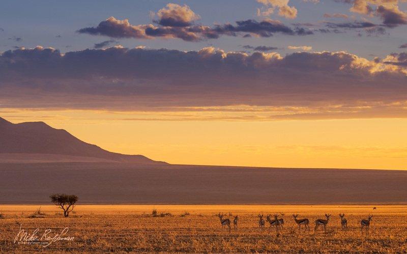 namib desert, namibrand natural reserve, southwestern namibia, impala, sky, antelope, trave NamibRandphoto preview