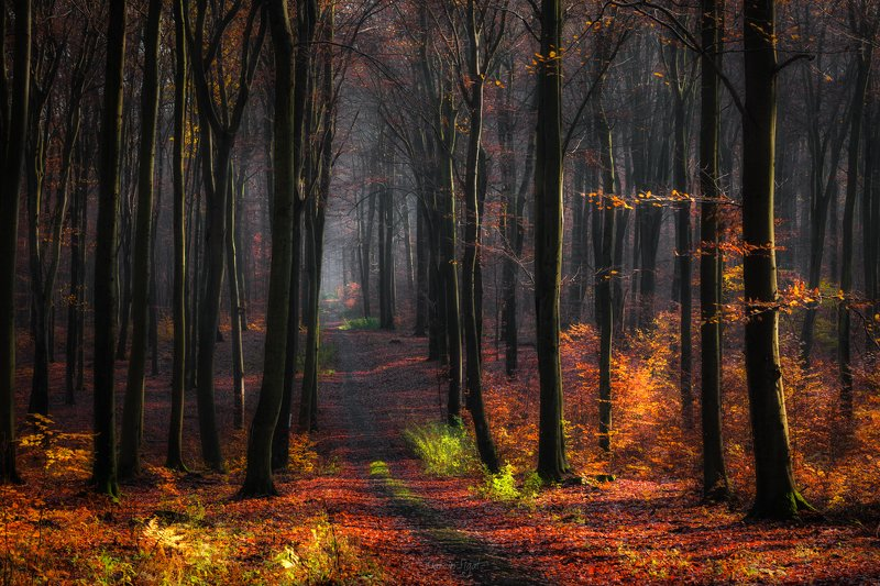 In the beech forest.photo preview