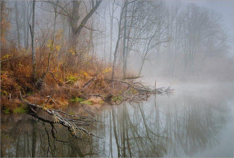 утро, туман, пруд, осень, беларусь, ноябрь Осенний пруд...photo preview