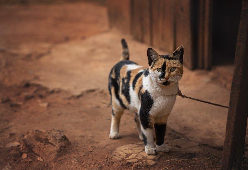 #кошка #мадагаскар #cat #madagaskar #afryka Мадагаскарская кошка photo preview
