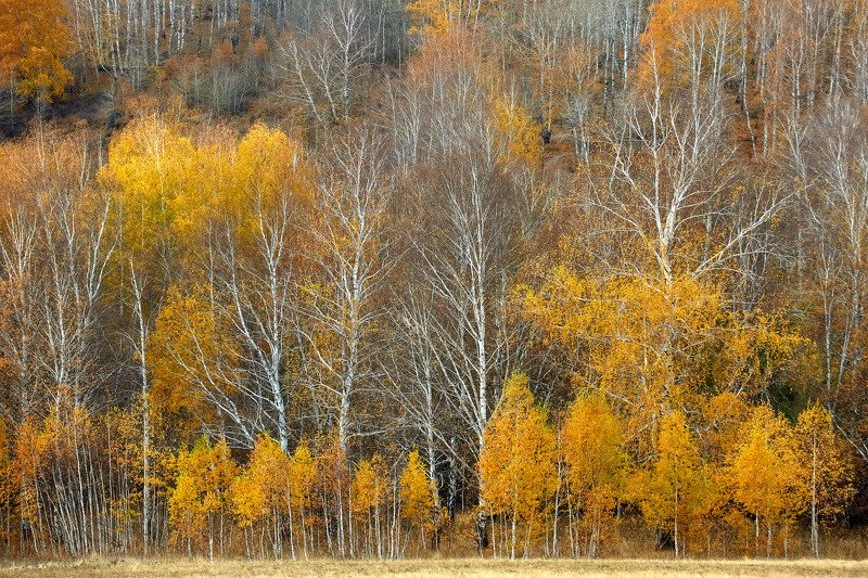 башкирия, южный урал орск новотроицк Осенняя Охра!photo preview