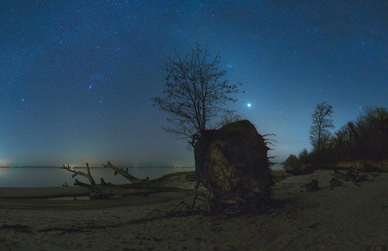 зодиакальный свет, равноденствие, астрофотография, звездное небо, звезды, венера, орион, созвездия, сириус, ночной пейзаж, ночная съемка, дерево, море, night photography, nightscape, venus, orion, sea, tree, sirius, night, sky, stars, astrophotography В погоне за зодиакальным светом ..photo preview