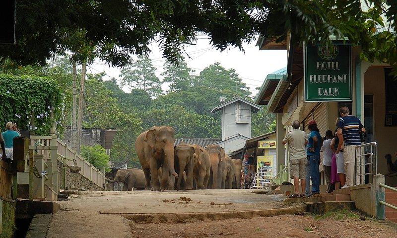 слоны \