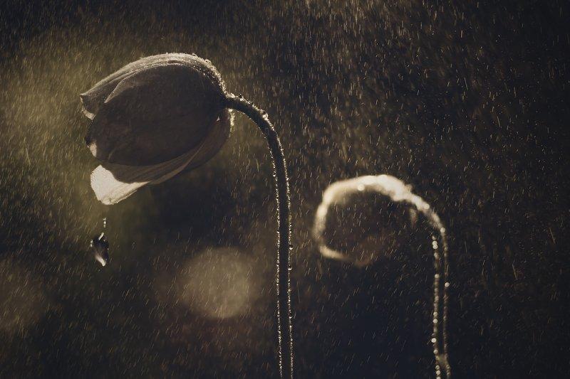 цветы. капли, бутон, дождь Последняя капляphoto preview