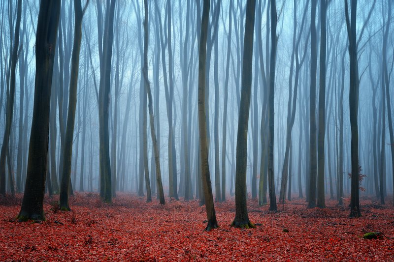 утро в буковом лесу beech forest mist foggy morning magic trees minimalism dranikowski nature деревья утро в буковом лесуphoto preview