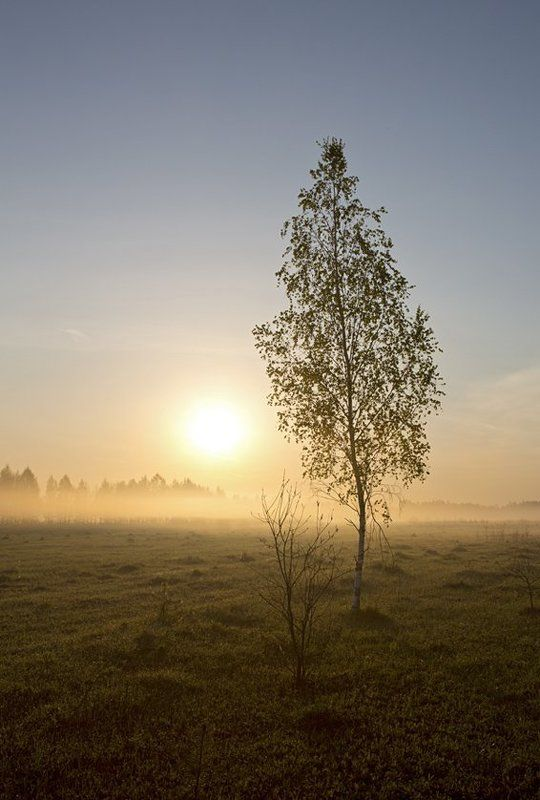 Утро в полеphoto preview