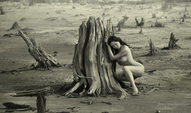 скорбь земли, сергей коляскин, экология, природа, деревья, смерть, загрязнение, вырубки Скорбь Землиphoto preview