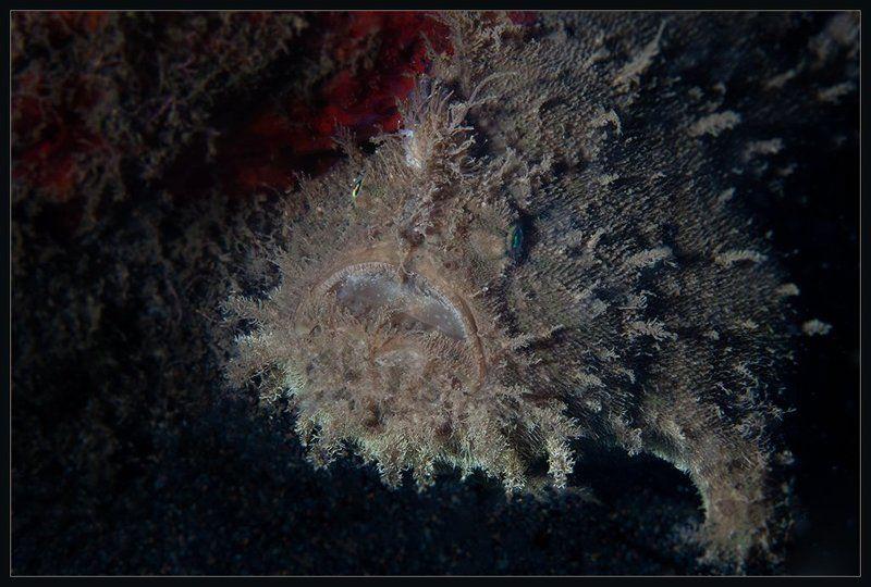 Чудища морскиеphoto preview