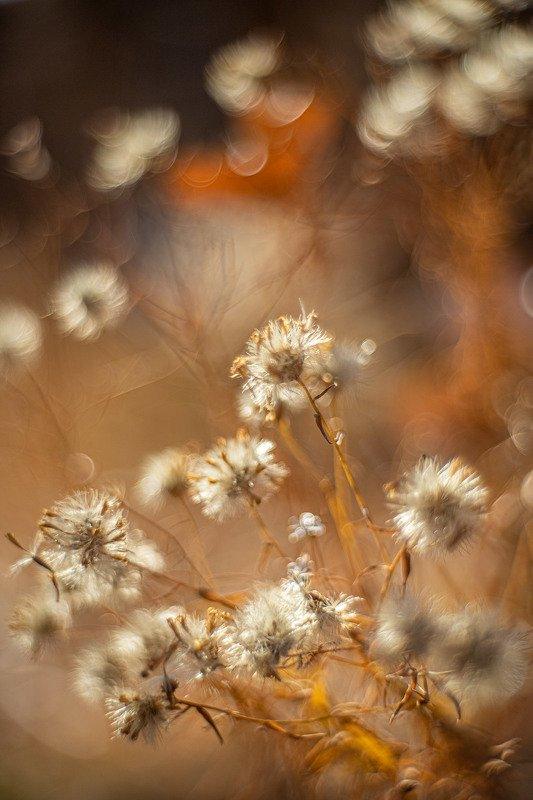 башкирия, южный урал орск новотроицк Сухая Осень!photo preview