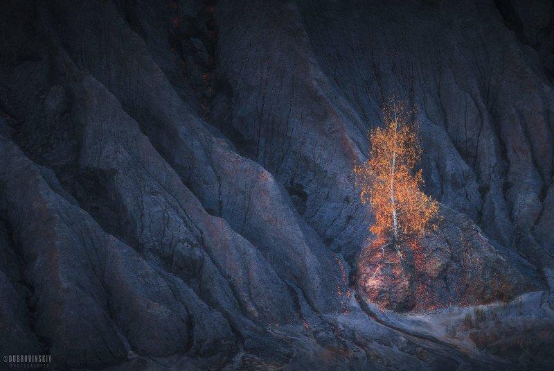 березка, карьер, кондуки, романцевские горы, осень Одиночествоphoto preview