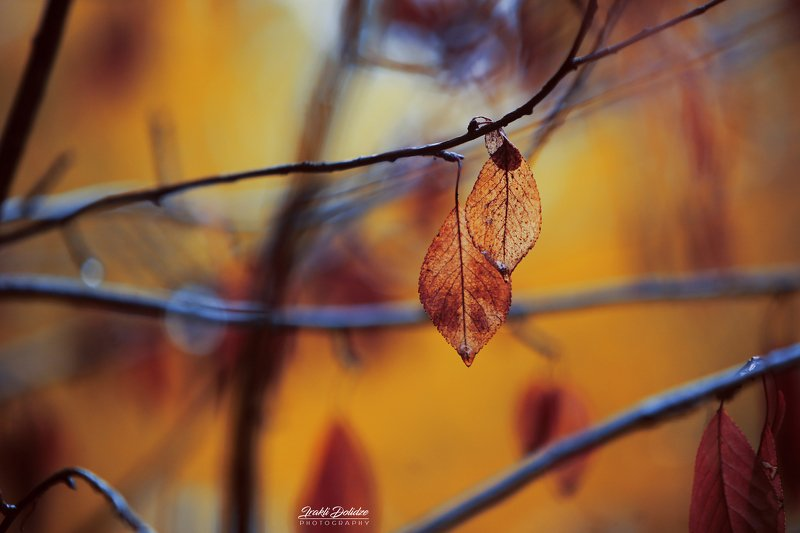 rain, raindrops, autumn, leave, leaf, drop, outdoor, photography, preset, bokeh, canon, yellow From my windowphoto preview
