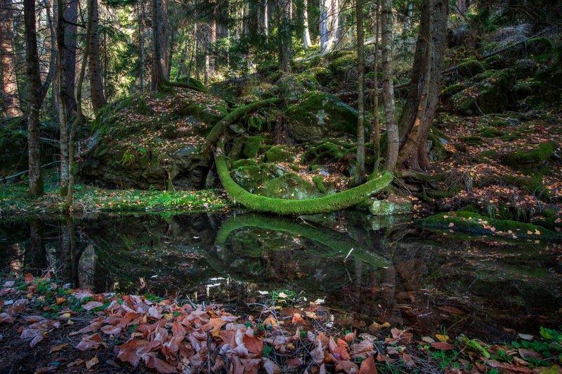 кчр,домбай,гоначхир,теберда,горы,карачаево-черкесия,осень,лес Сказочный лес ...photo preview