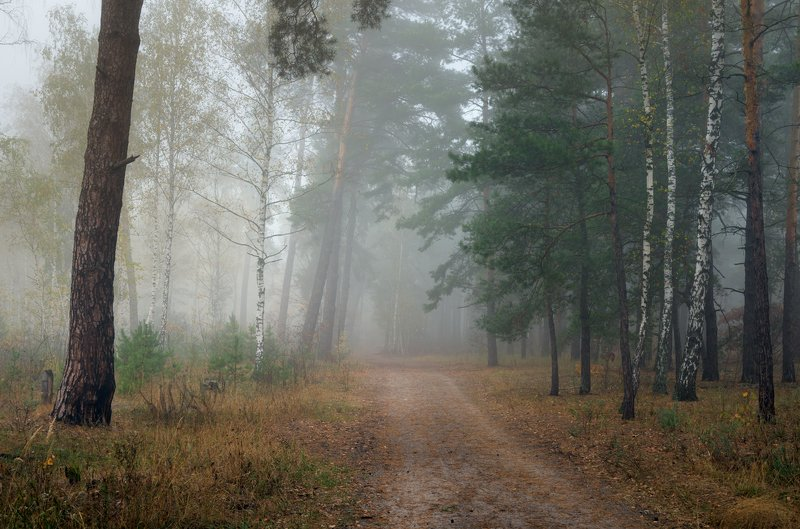 лес, осень, октябрь, утро, рассвет, туман, белый Магия белого туманаphoto preview
