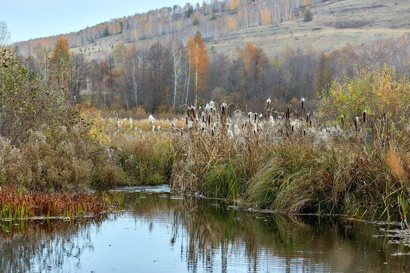 башкирия, южный урал орск новотроицк Камышиная Осень!photo preview