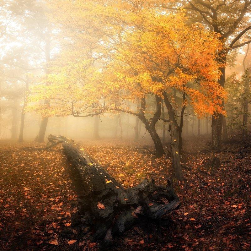 Autumn Carpathians фото превью
