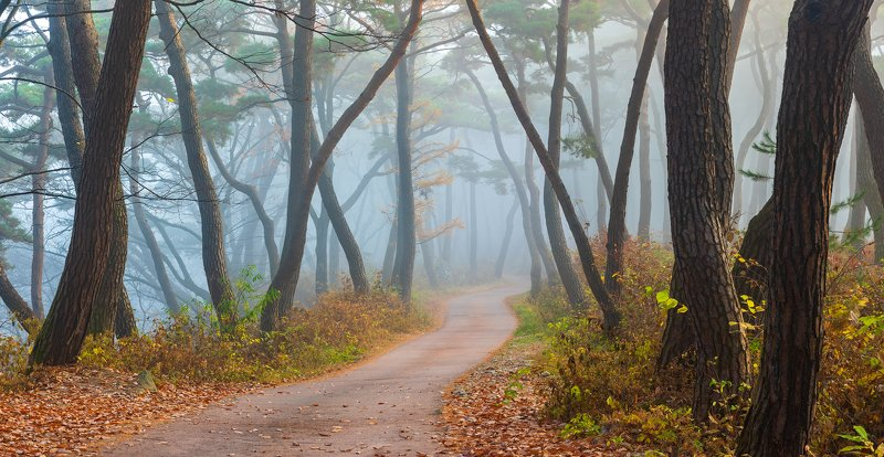 forest, autumn, place, korea, trees, pine panorama Into the old wood worldphoto preview