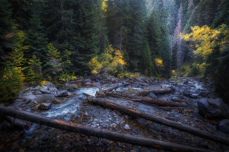 #кавказ #теберда #домбай #бадук #лес #горы #осень По пути к озерамphoto preview