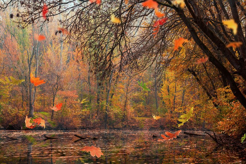 fall, autumn, colors, nature photo preview