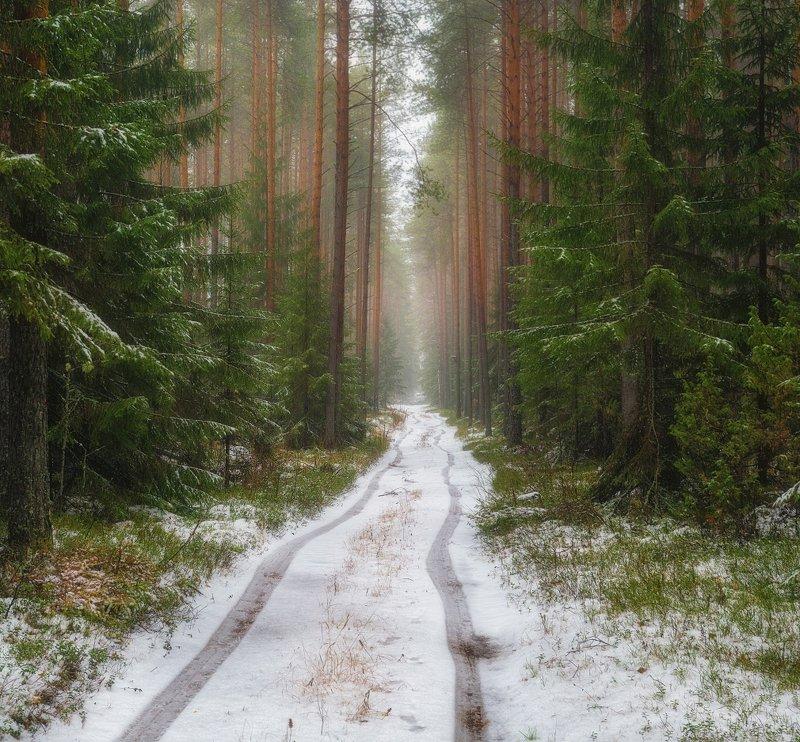 Дорога из осени в зимуphoto preview