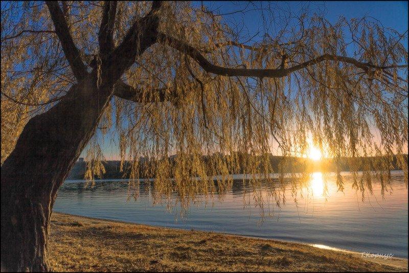река,Днепр,ива,вечер,осень,контражур  Осенний светphoto preview