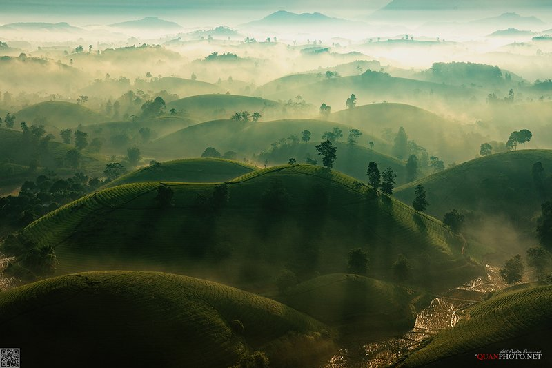 quanphoto, landscape, morning, sunrise, nature, dawn, rays, sunlight, hill, tea, plantation, vietnam the Layers of Lightphoto preview