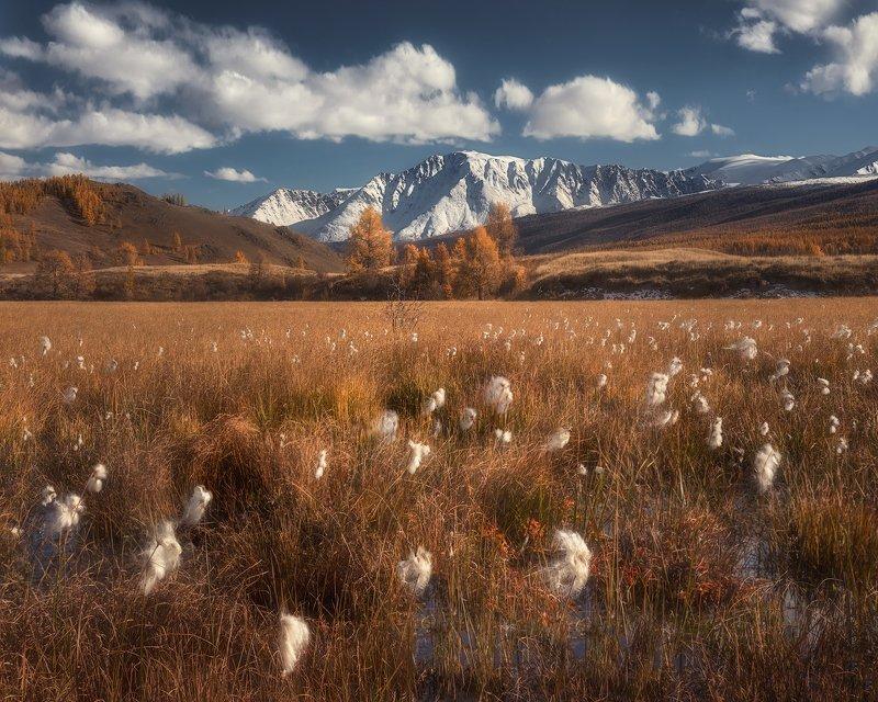 алтай,горный алтай, пейзаж, северо-чуйский хребет, джангысколь Пушинки осениphoto preview